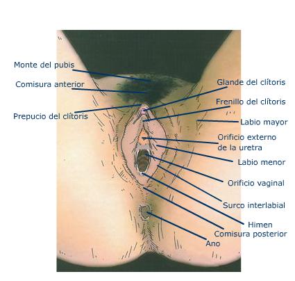 CORRIDA VULVA XXX, vídeos porno de corrida vulva