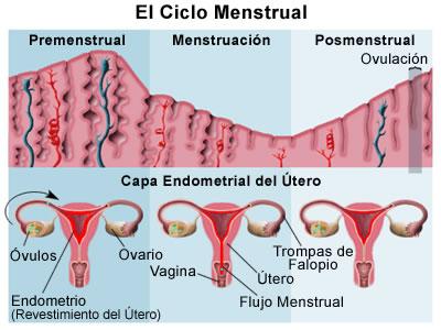 Tipos de flujo durante el ciclo menstrual