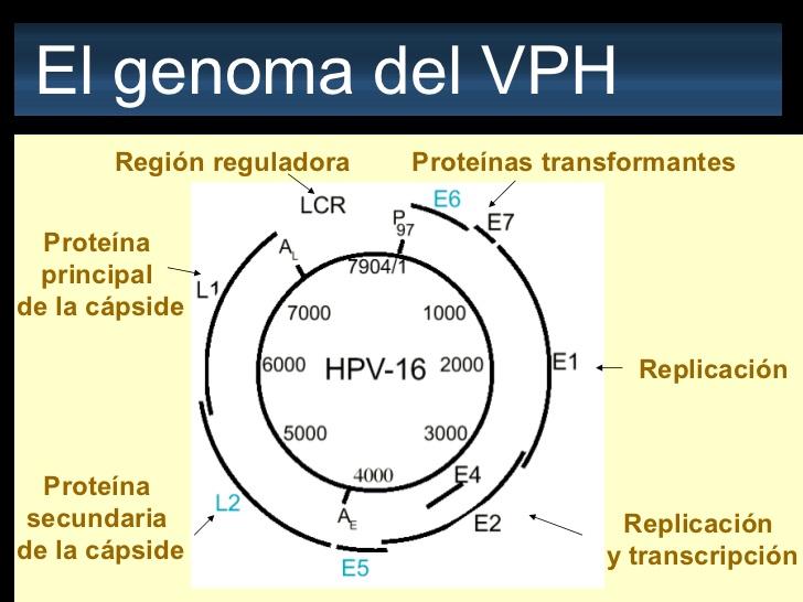 Virus del papiloma genotipo 16, Virus del papiloma humano genotipo 16 y 18, Video CSID